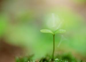 Sound Reiki Healing Meditations begin again in August