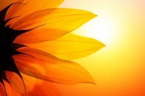 Sound Reiki Healing Meditations